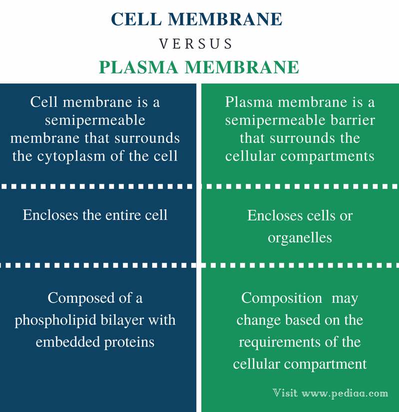 Difference Between Cell Membrane and Plasma Membrane - Comparison Summary