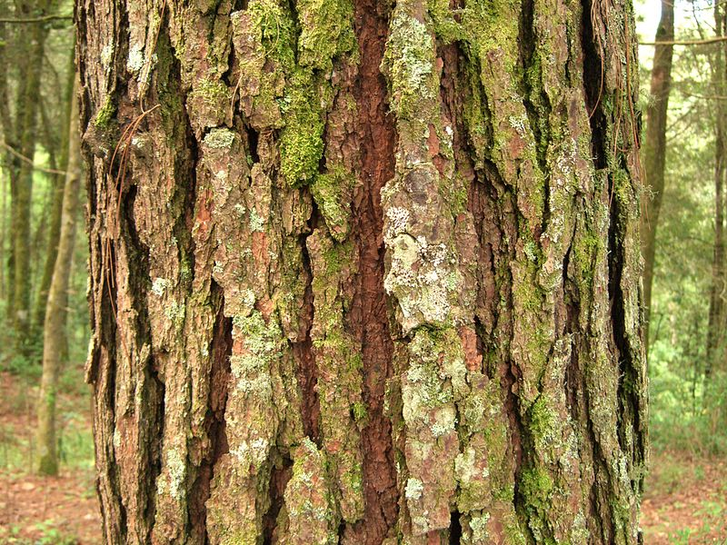 Difference Between Cork and Bark