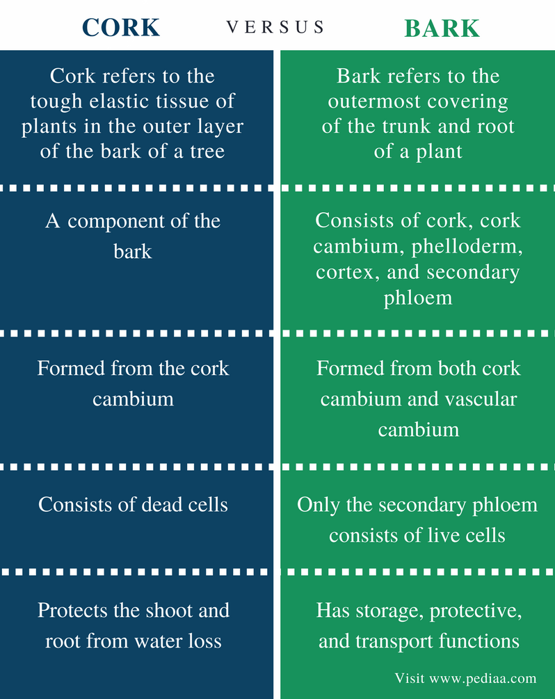 Difference Between Cork and Bark - Comparison Summary