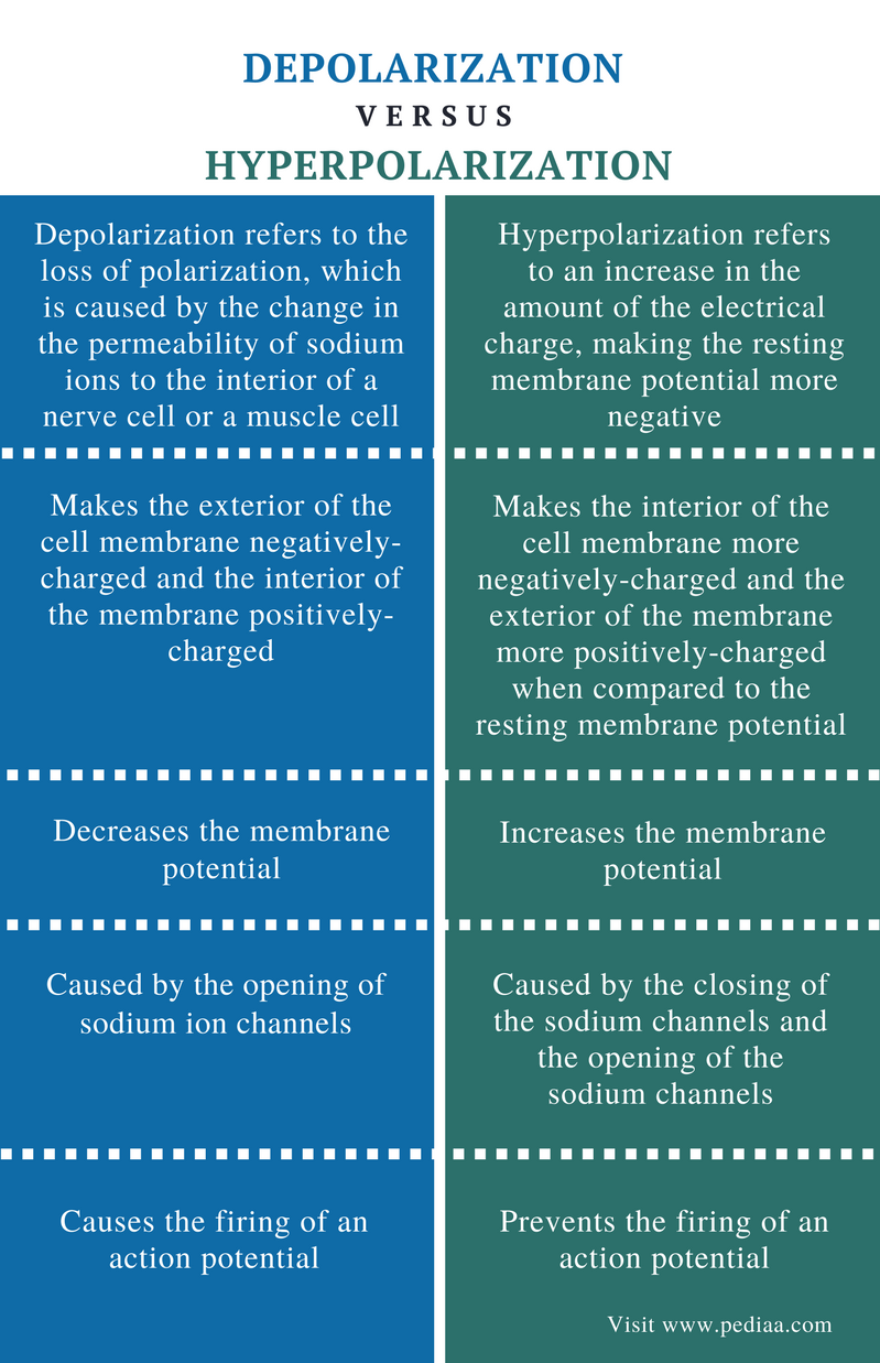 Difference Between Depolarization and Hyperpolarization - Comparison Summary