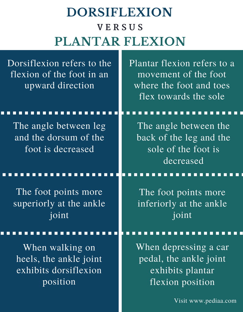 Difference Between Dorsiflexion and Plantar Flexion | Definition ...