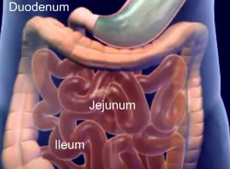 Main Difference - Duodenum vs Jejunum