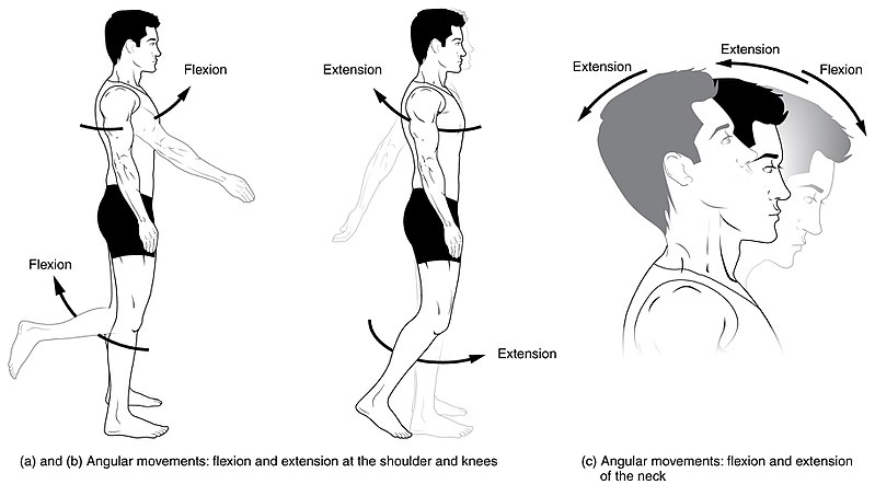 Difference Between Flexion and Extension