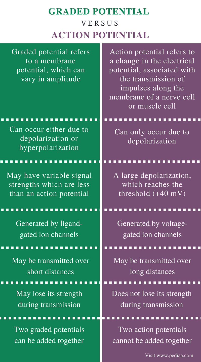 Difference Between Graded Potential and Action Potential - Comparison Summary
