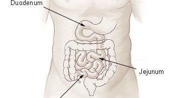 Difference Between Jejunum and Ileum