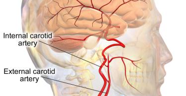 Difference Between Jugular Vein and Carotid Artery