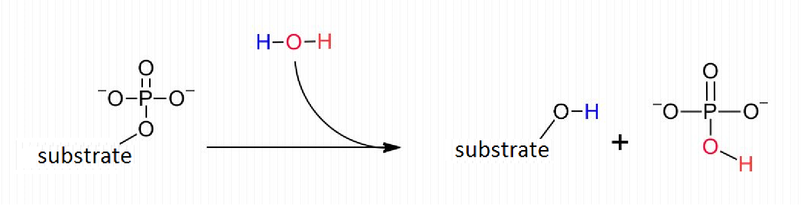 Main Difference - Kinase vs Phosphatase