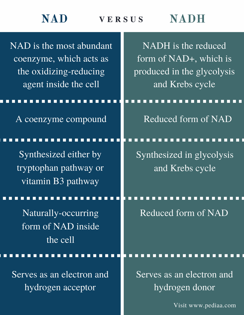 Difference Between NAD and NADH - Comparison Summary