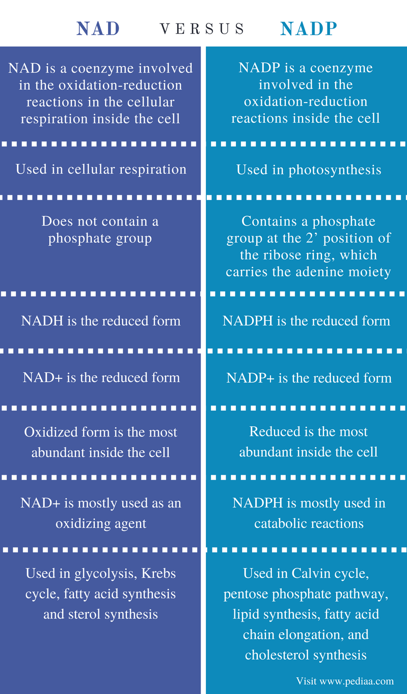 Difference Between NAD and NADP - Comparison Summary