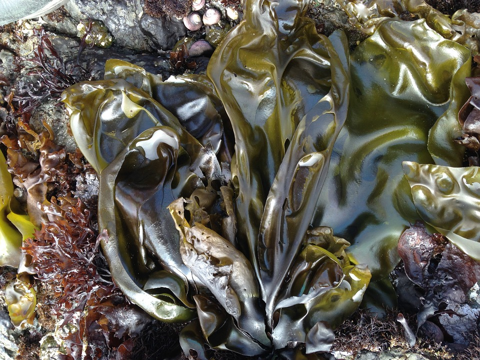Difference Between Protozoa and Algae