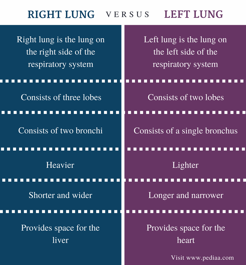 Difference Between Right and Left Lung | Definition, Location ...