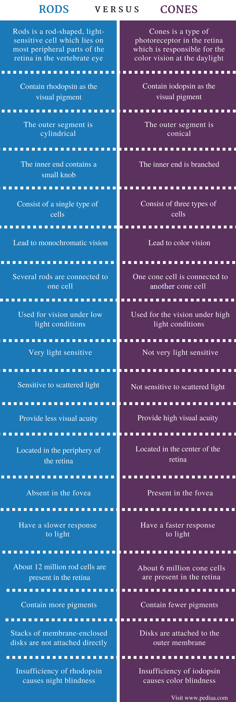 Difference Between Rods and Cones - Comparison Summary