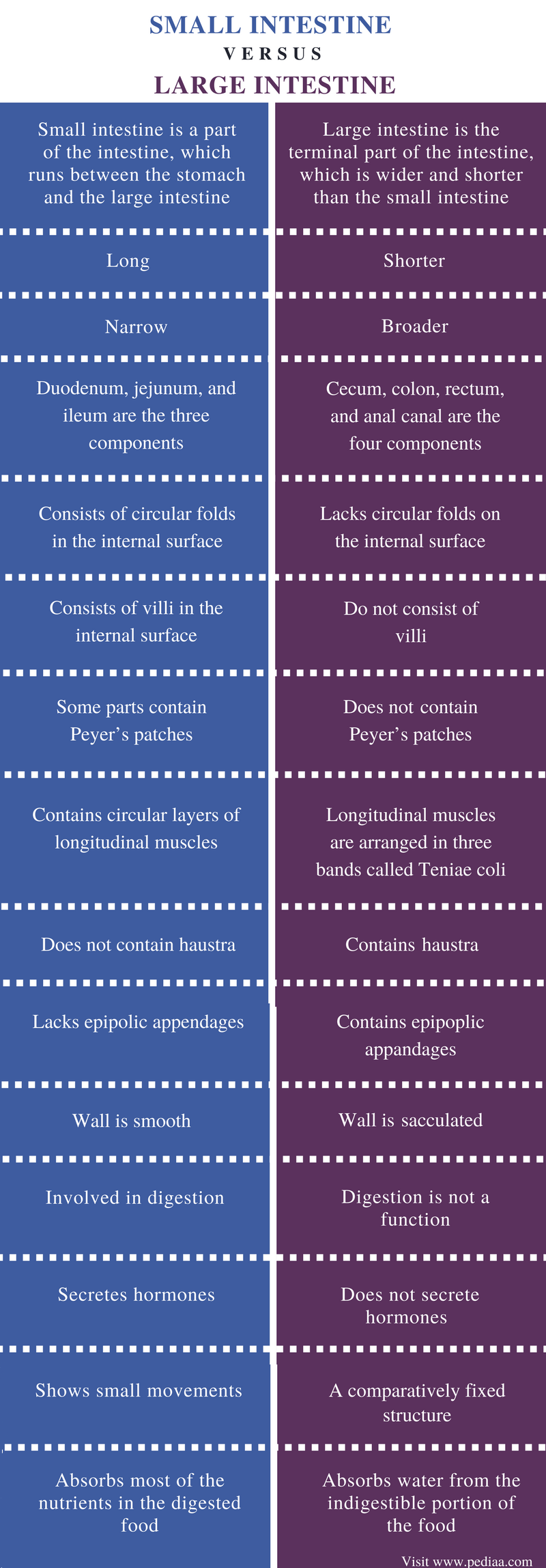 Difference Between Small and Large Intestine - Comparison Summary