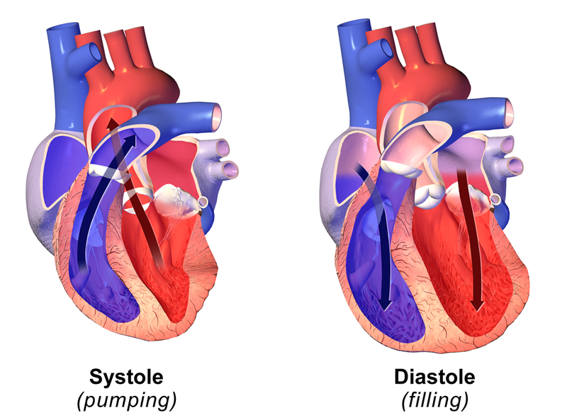 Difference Between Systolic and Diastolic