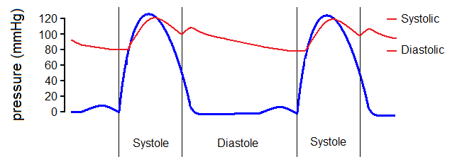 Main Difference - Systolic vs  Diastolic