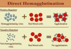 Difference Between Agglutination and Coagulation
