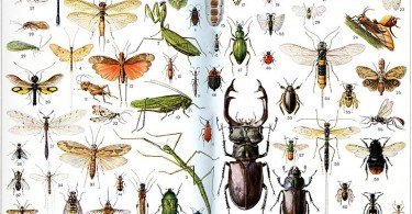 Difference Between Bugs and Insects