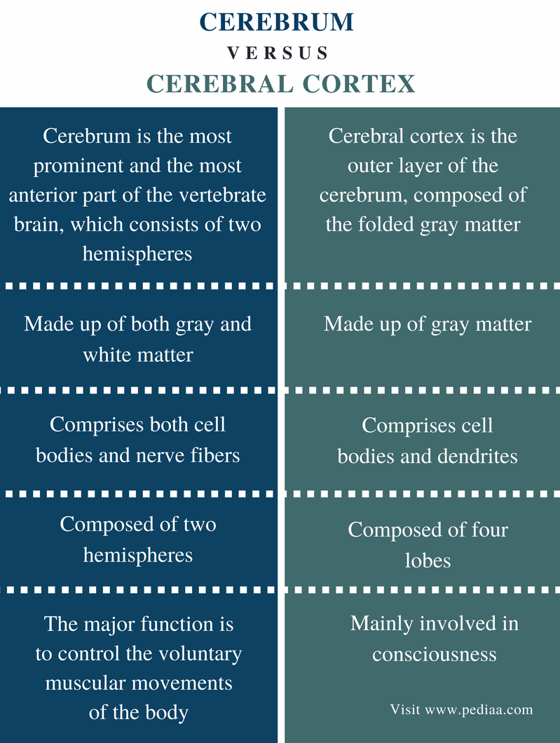 Difference Between Cerebrum and Cerebral Cortex - Comparison Summary