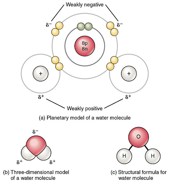 Difference Between Covalent and Polar Covalent