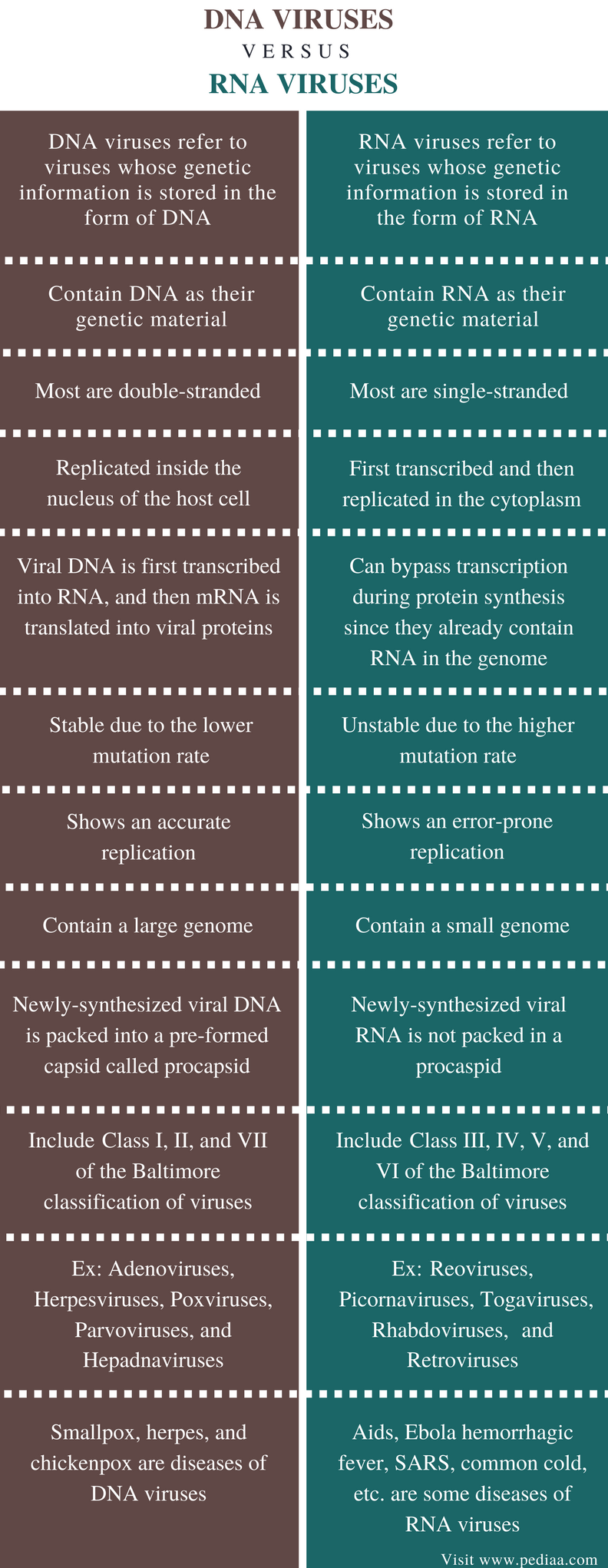 Difference Between DNA and RNA Viruses - Comparison Summary