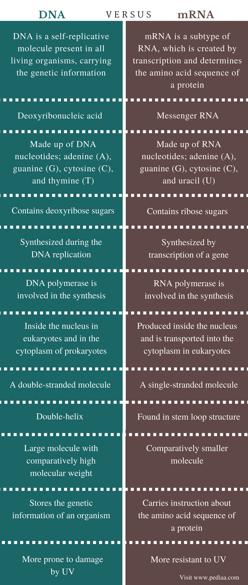 Difference Between DNA and mRNA - Comparison Summary