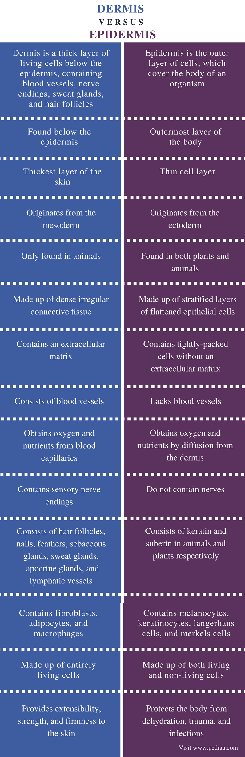 Difference Between Dermis And Epidermis Definition Structure