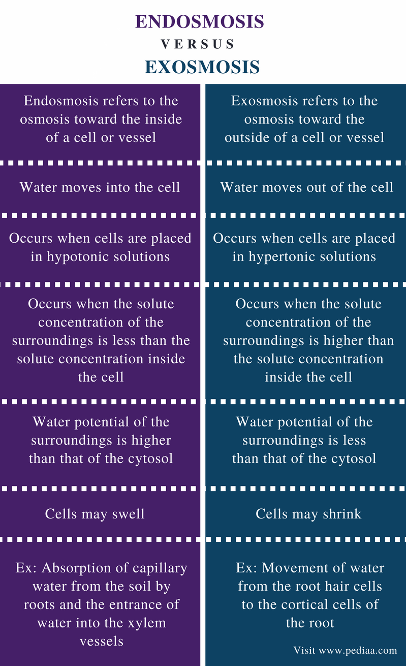 Difference Between Endosmosis and Exosmosis - Comparison Summary