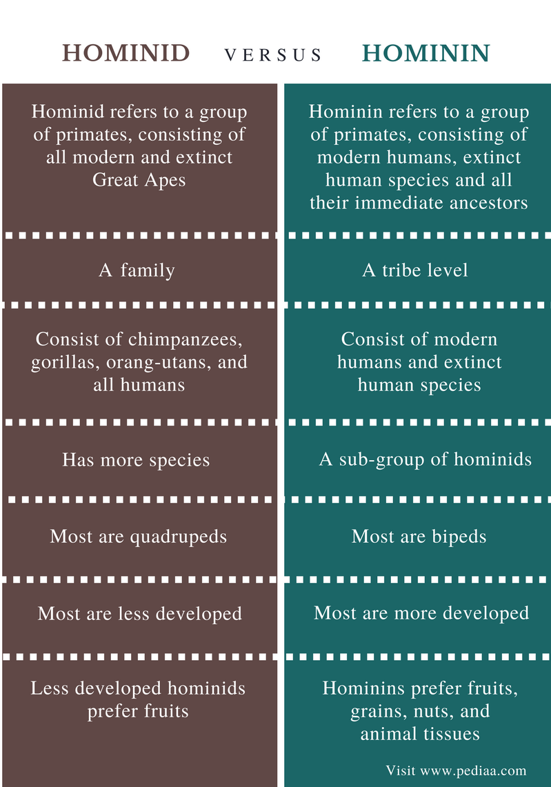 Difference Between Hominid and Hominin - Comparison Summary (1)