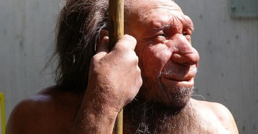 Difference Between Neanderthals and Homo Sapiens