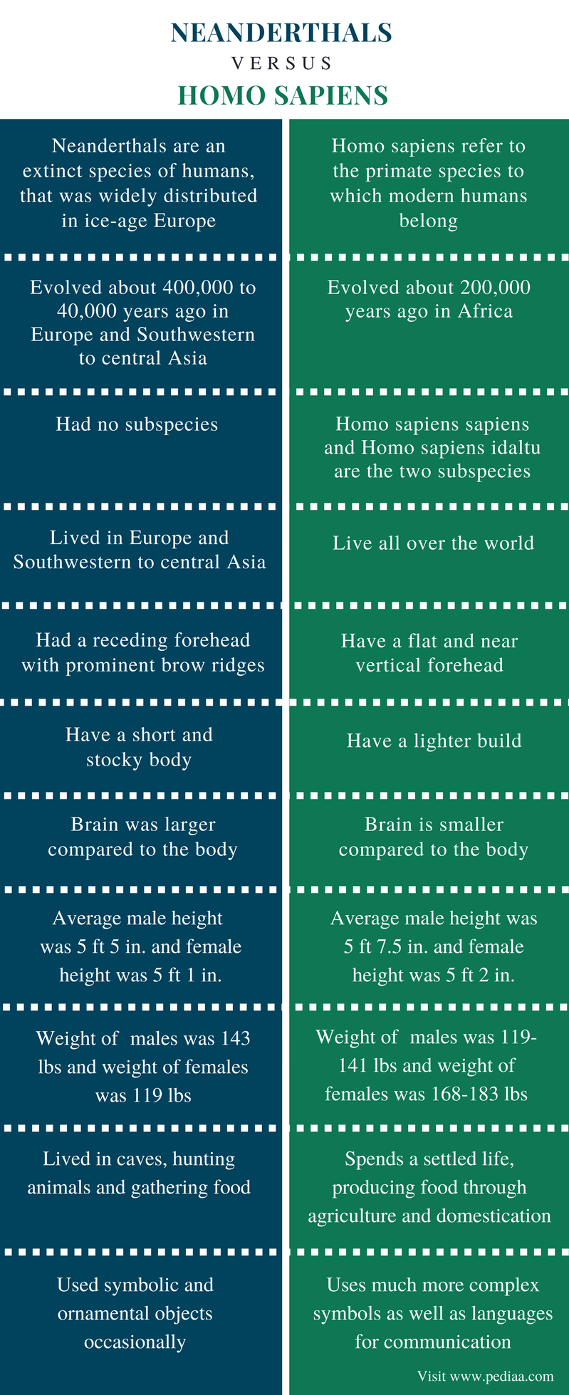 Difference Between Neanderthals and Homo Sapiens - Comparison Summary