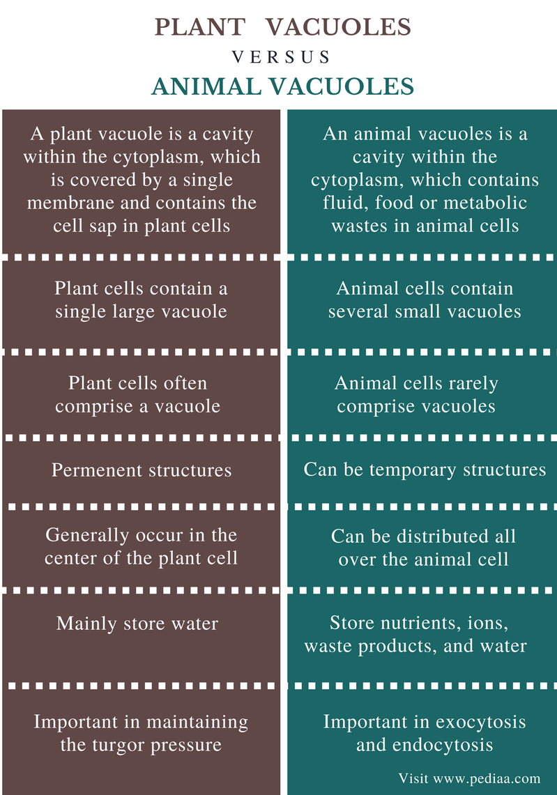 Difference Between Plant and Animal Vacuoles - Comparison Summary