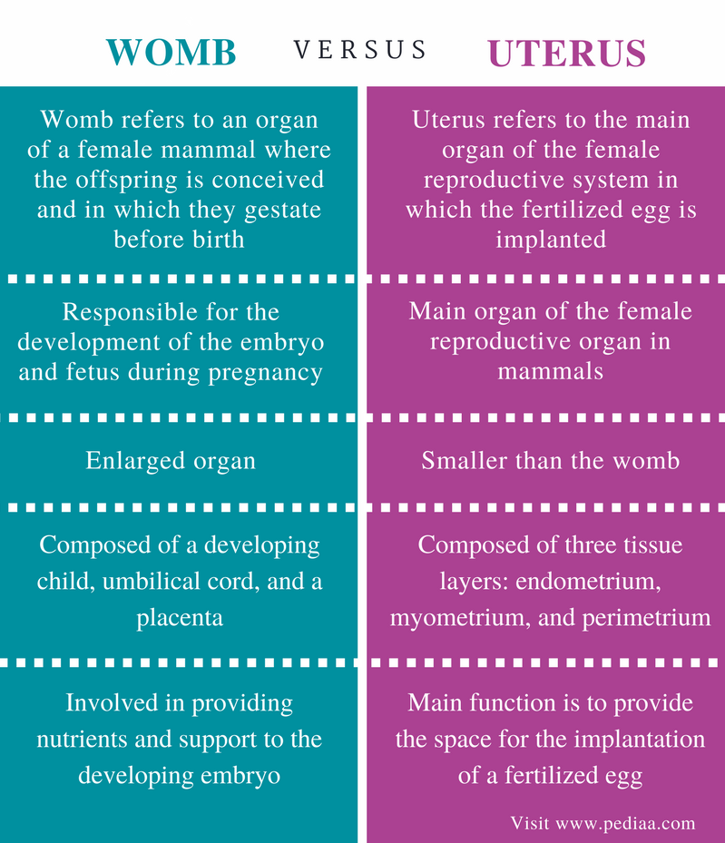 Difference Between Womb and Uterus - Comparison Summary