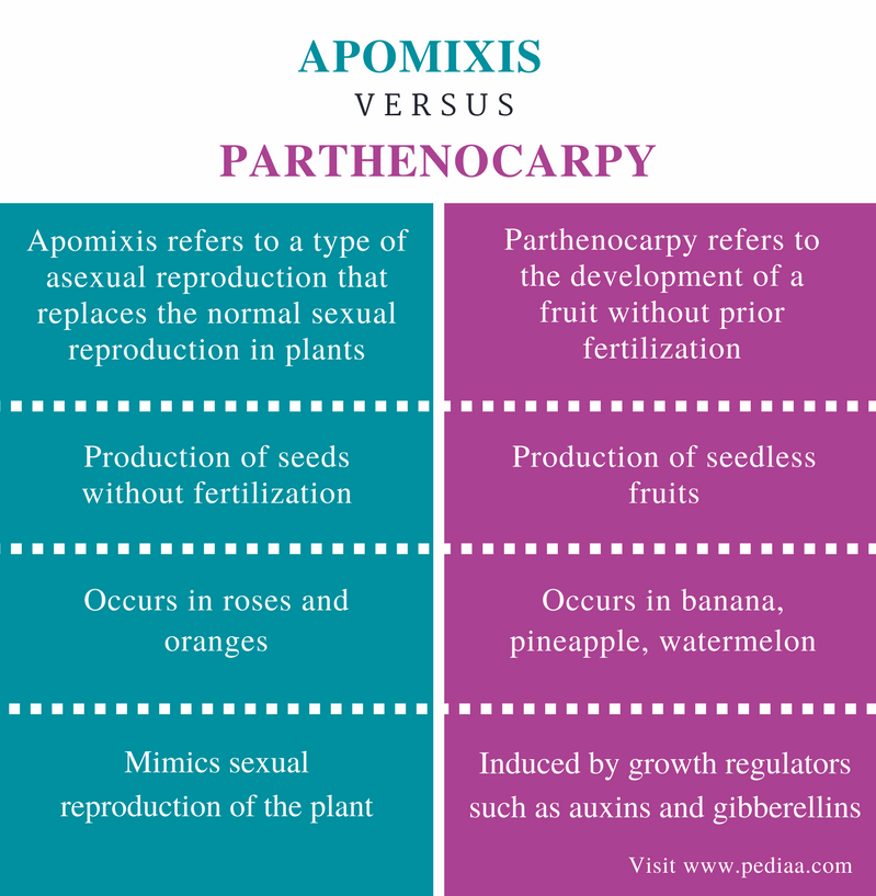 Difference Between Apomixis and Parthenocarpy - Comparison Summary