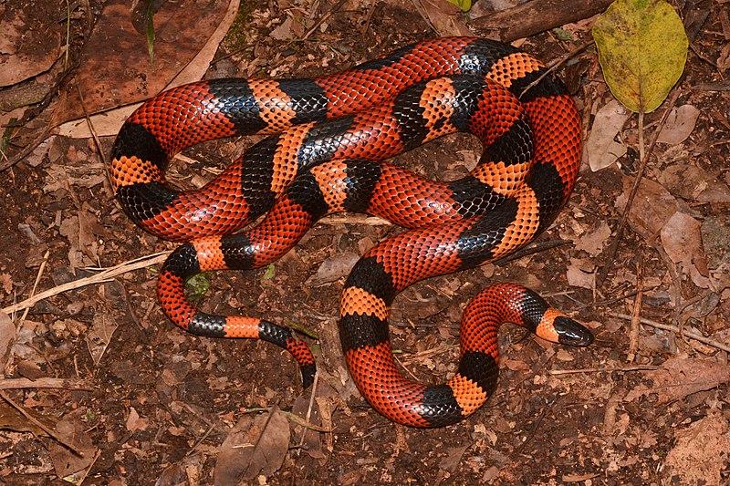 Figure 1: A Snake