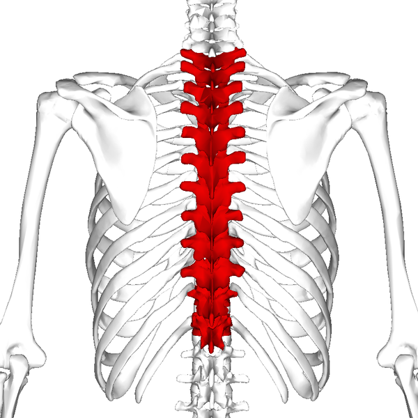 Spine anatomy definition