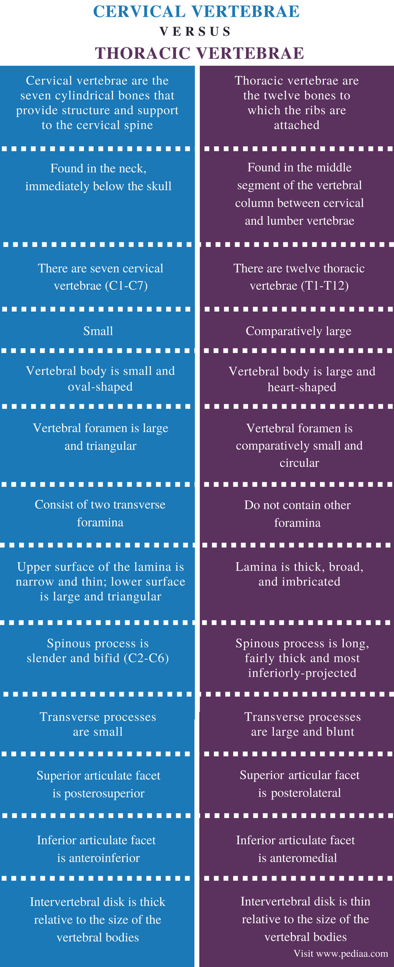 Difference Between Cervical and Thoracic Vertebrae - Comparison Summary