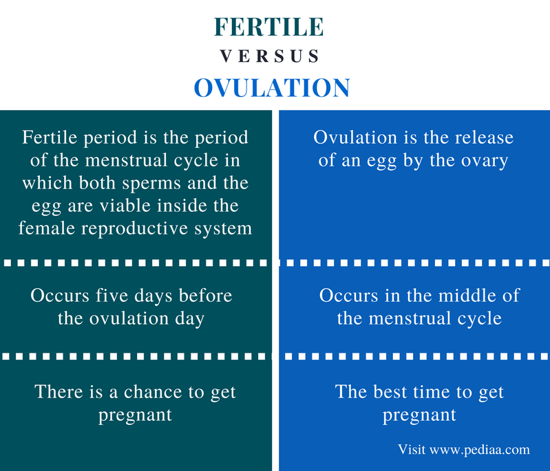 how to become fertile for pregnancy