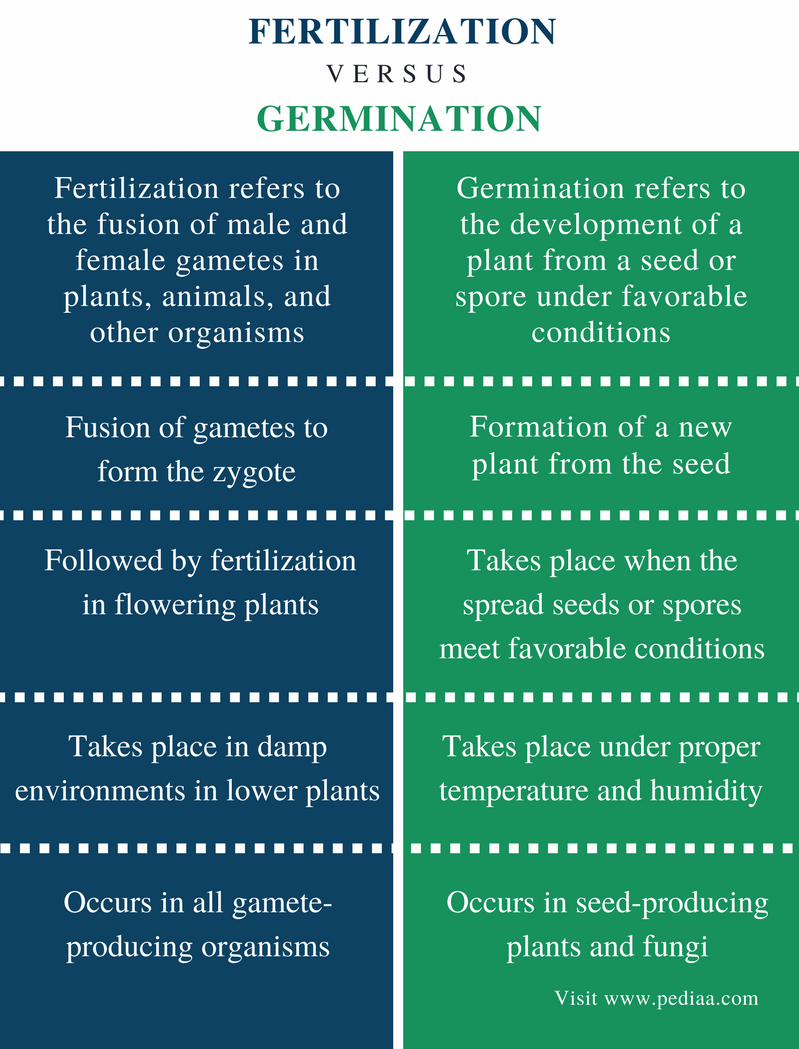 Difference Between Fertilization and Germination - Comparison Summary