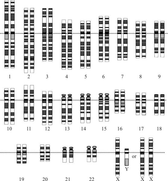 Difference Between Homologous and Non-homologous Chromosomes