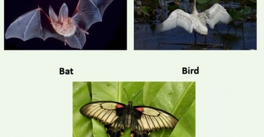 Difference Between Homology and Homoplasy