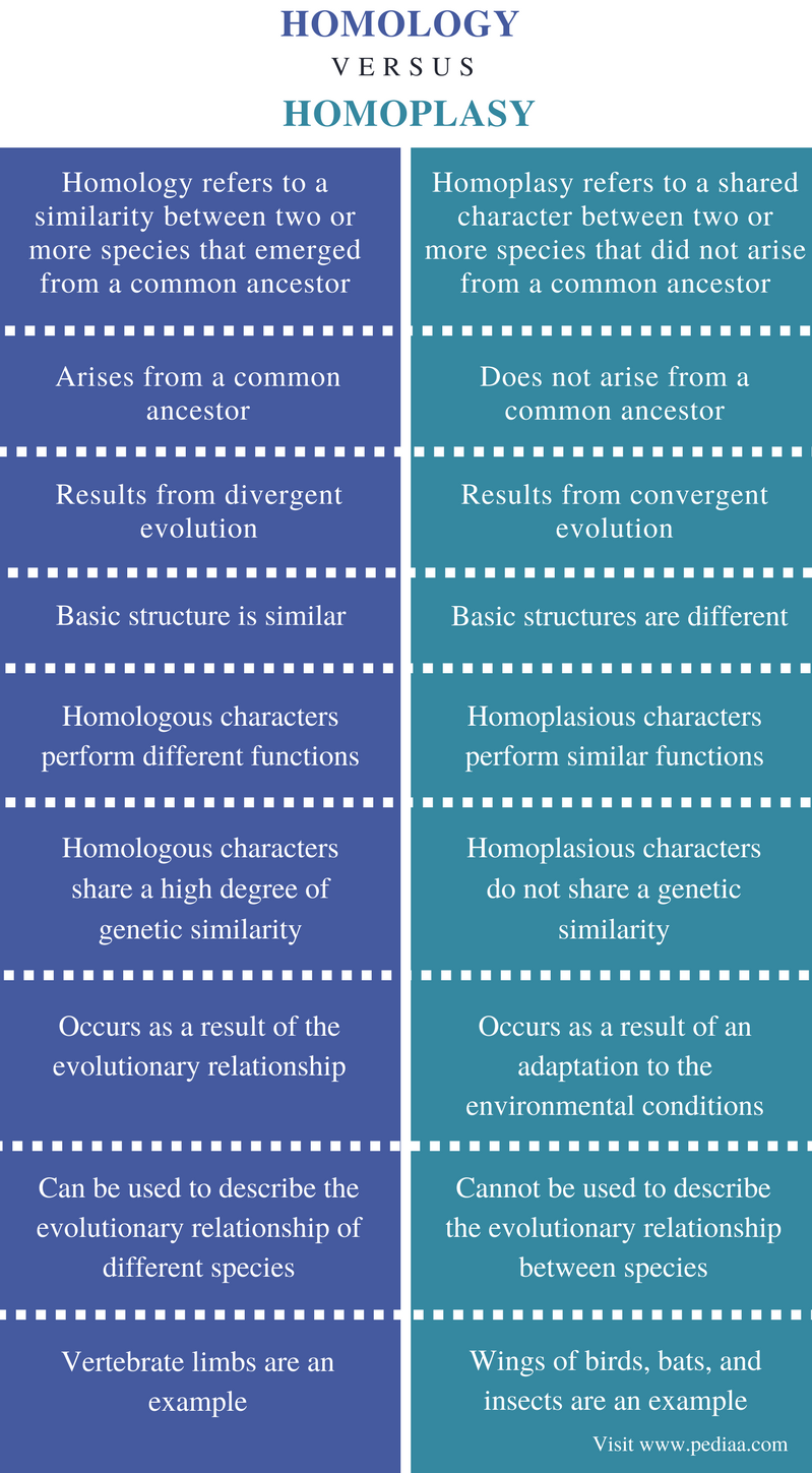 Difference Between Homology and Homoplasy - Comparison Summary