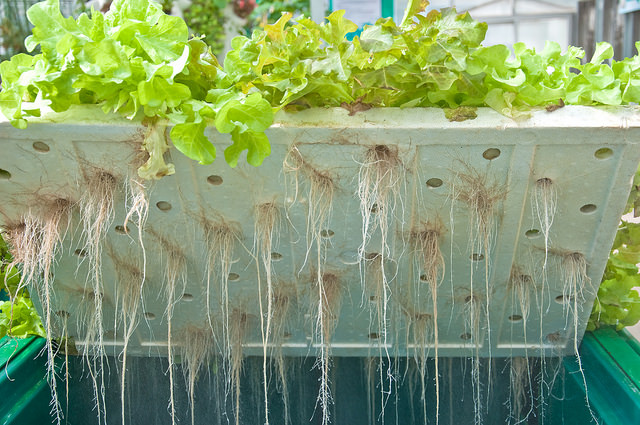 Difference Between Hydroponics And Aquaponics Definition