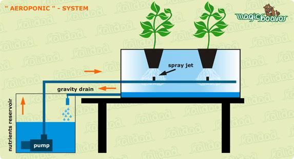 Difference Between Hydroponics and Aquaponics_Figure 2