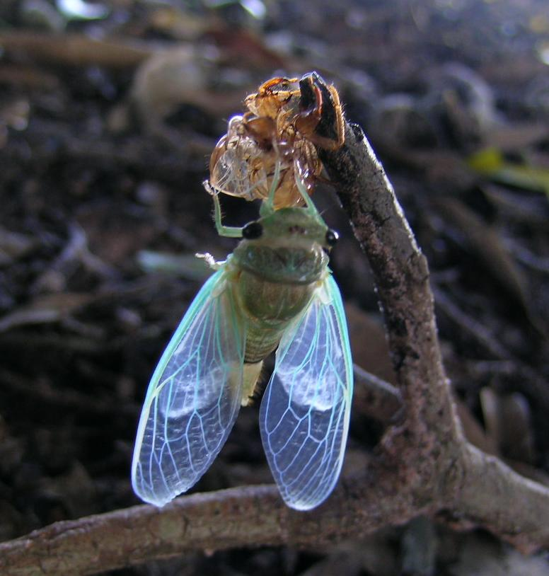 Main Difference - Molting vs Metamorphosis