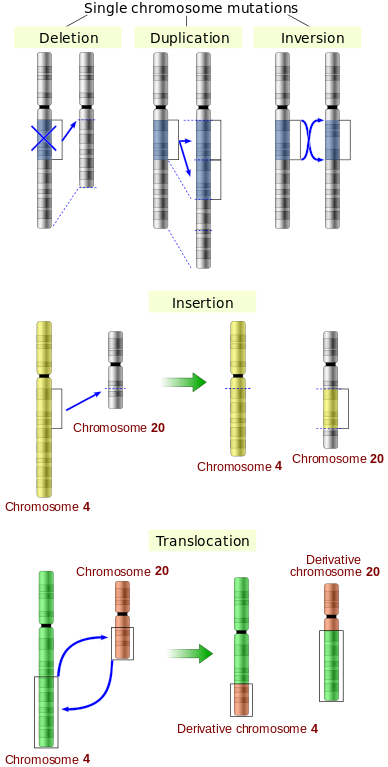 Difference Between Mutation and Recombination