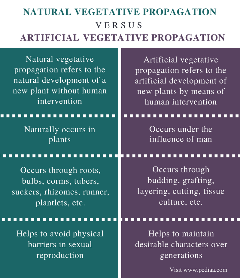 Difference Between Natural and Artificial Vegetative Propagation - Comparison Summary