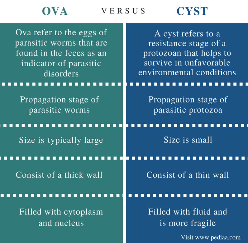 Difference Between Ova and Cyst - Comparison Summary