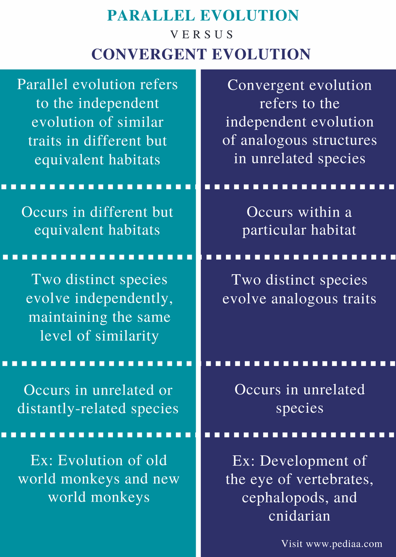 Difference Between Parallel and Convergent Evolution - Comparison Summary