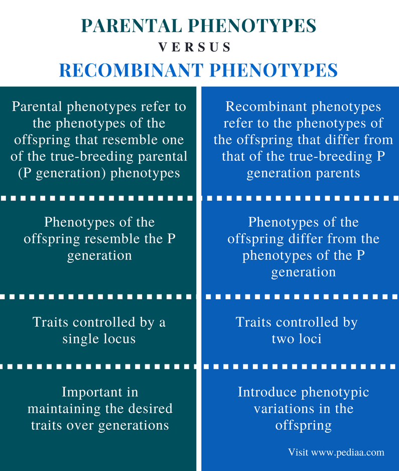 Difference Between Parental and Recombinant Phenotypes - Comparison Summary