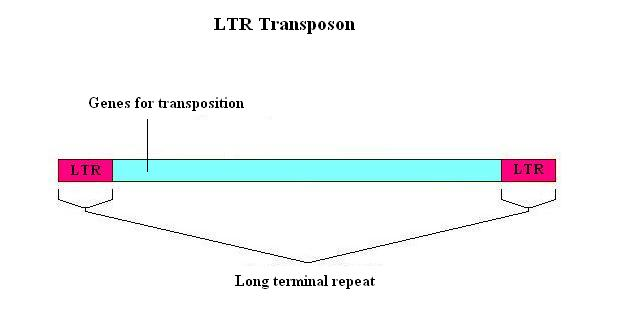 Difference Between Plasmid and Transposon_Figure 4